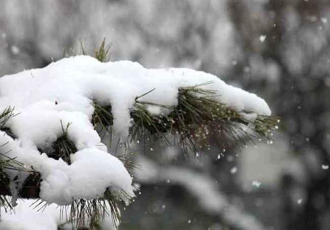 20201230 松に雪