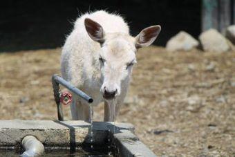 岩手サファリパーク ダマジカ 蛇口から直飲みする水の味は格別?0