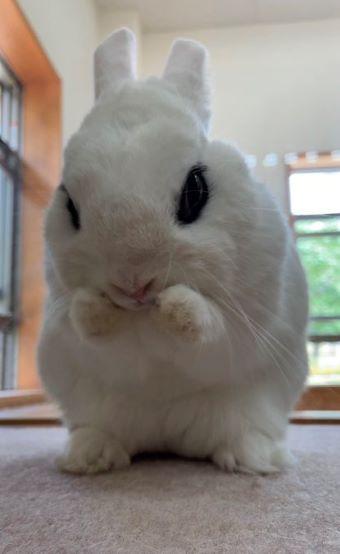イングランドの丘 ウサギ しゅっ!しゅっ!