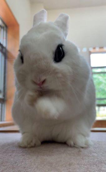 イングランドの丘 ウサギ しゅっ!しゅっ!1