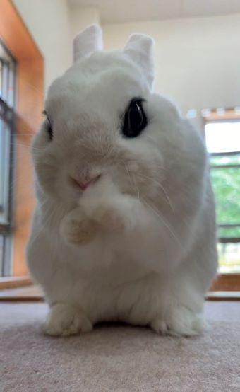 イングランドの丘 ウサギ しゅっ!しゅっ!2