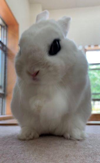 イングランドの丘 ウサギ しゅっ!しゅっ!3