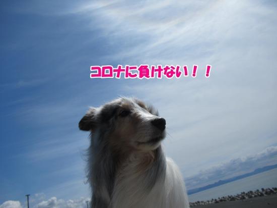 IMG_2677 (1)