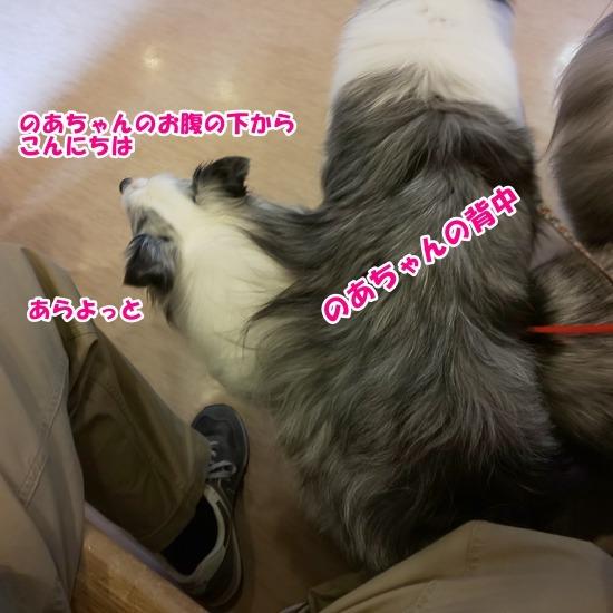 DSC_0875 (1)