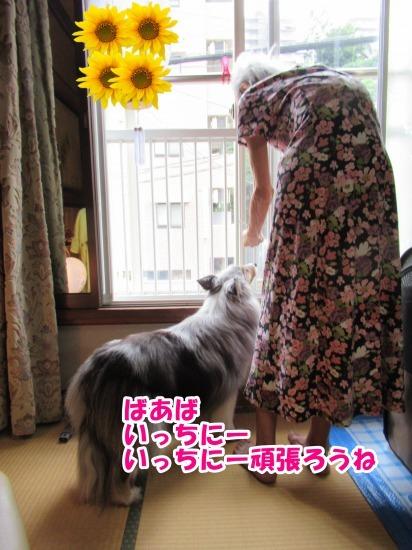 IMG_3194 (1)