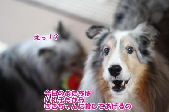 IMG_9110 (1)