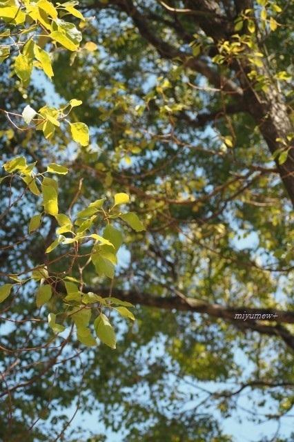 樹木200306