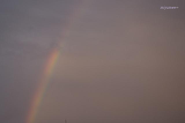 rainbow200310