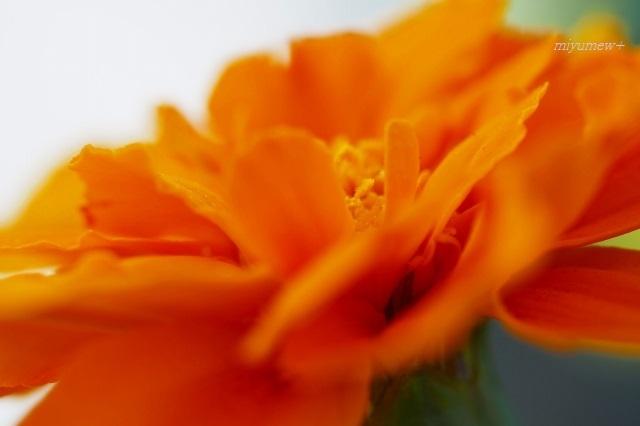 オレンジ200502