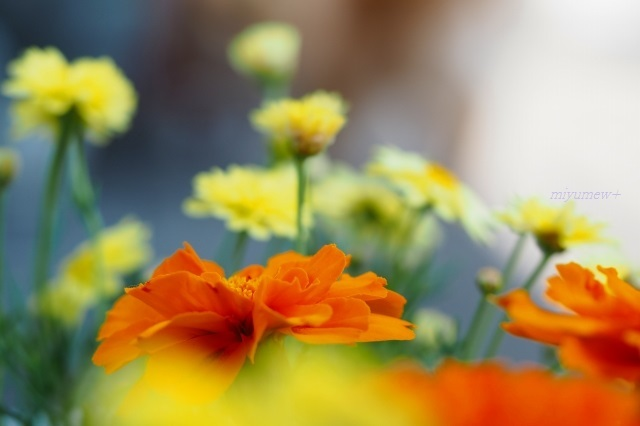 flowers200502