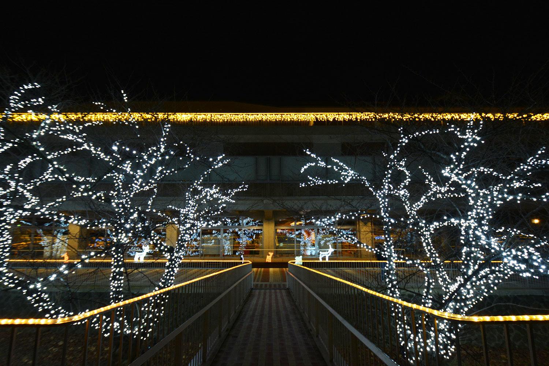 能代市役所さくら庭を彩るイルミネーション620201207
