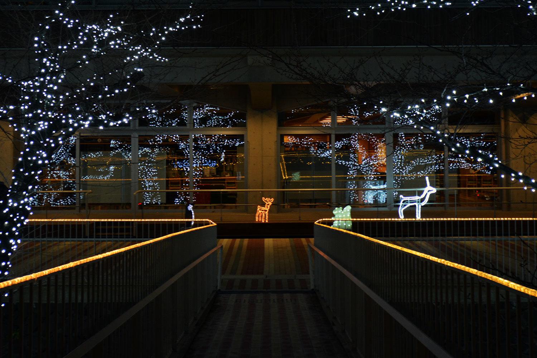 能代市役所さくら庭を彩るイルミネーション720201207