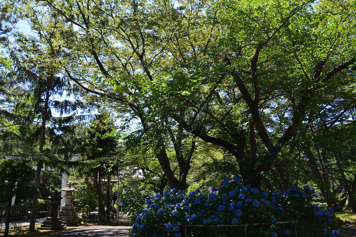 能代市柳町 八幡神社920200801