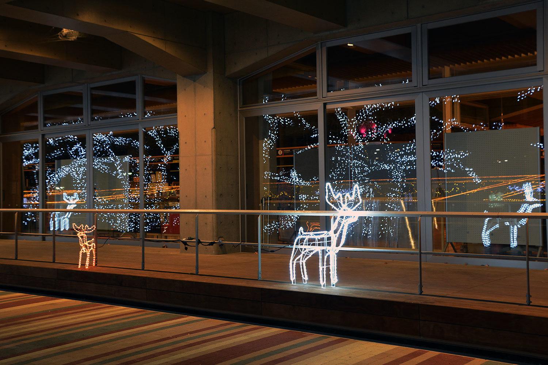 能代市役所さくら庭を彩るイルミネーション1120201207