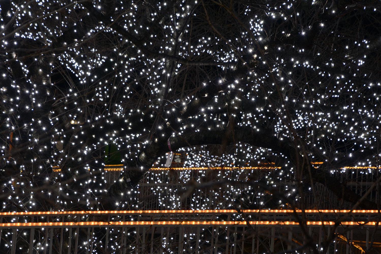 能代市役所さくら庭を彩るイルミネーション1420201207