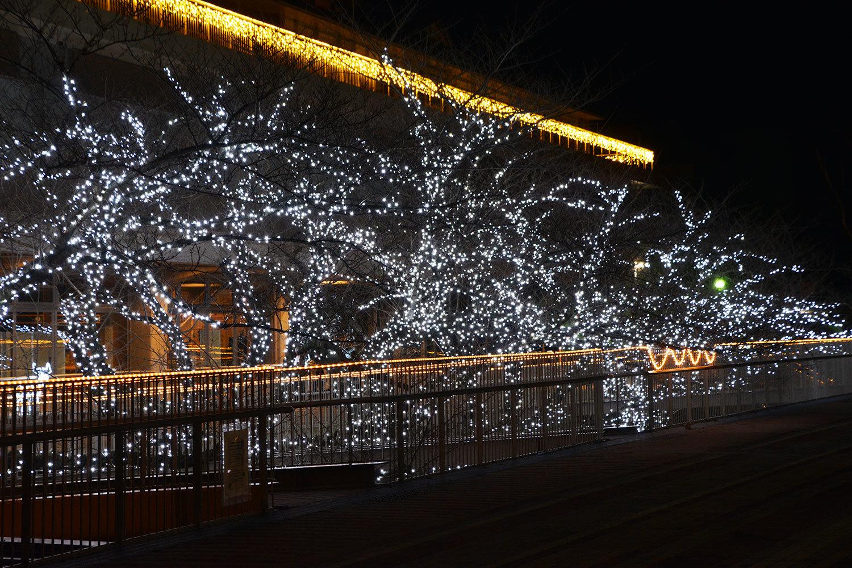 能代市役所さくら庭を彩るイルミネーション1520201207