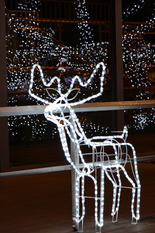 能代市役所さくら庭を彩るイルミネーション1720201207