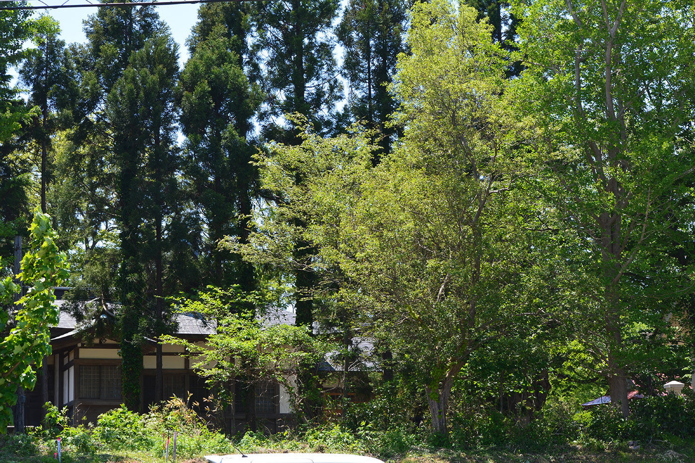 能代市御指南町 営林署1120200529