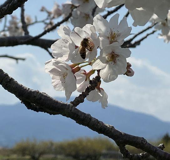 春の小川②