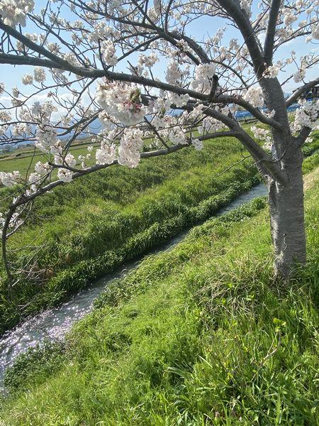 春の小川①