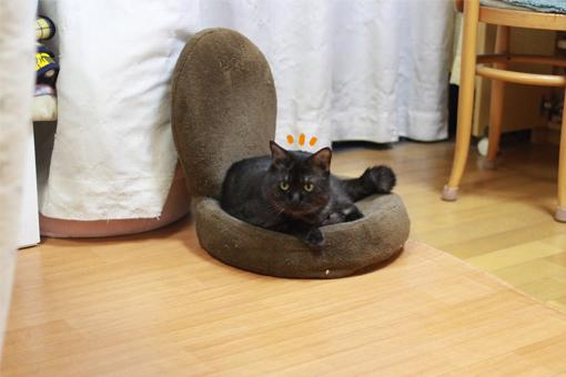 あれ?黒缶の箱に黒猫が入ってるってるよ。やっぱ黒は黒同士、同じ色に惹かれちゃうのかねぇ〜?