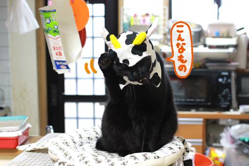 猫は全員もれなく被り物が大っ嫌いな裏切り者伝説。