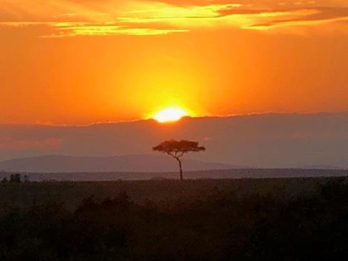アカシアの木と夕陽