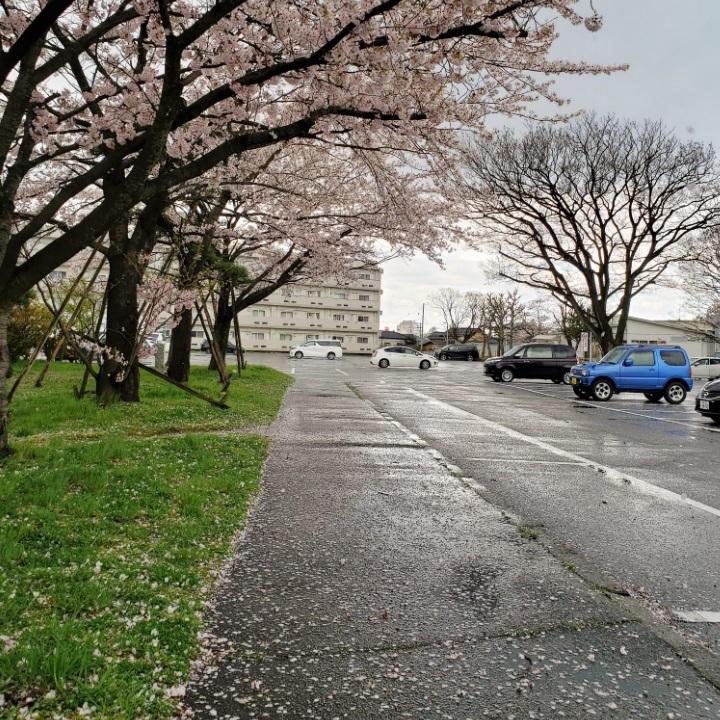 200410霰と桜