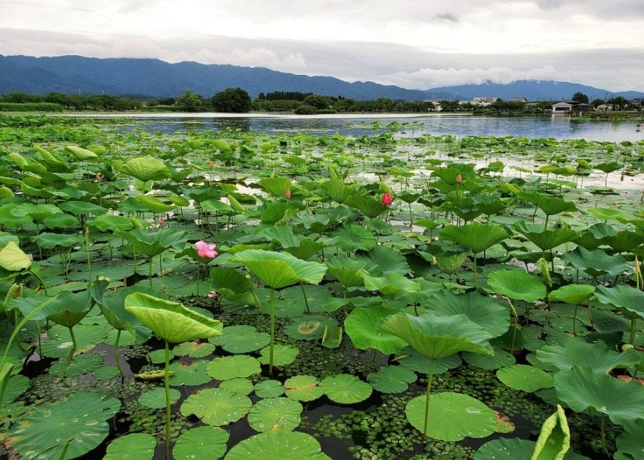 200705瓢湖1