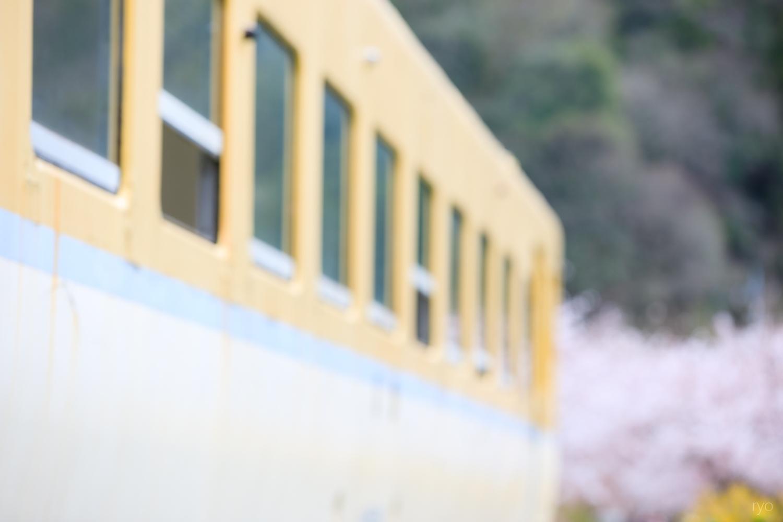 安野 花の駅公園_2