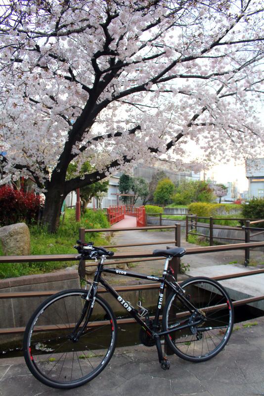 桜とジオス・ミストラル