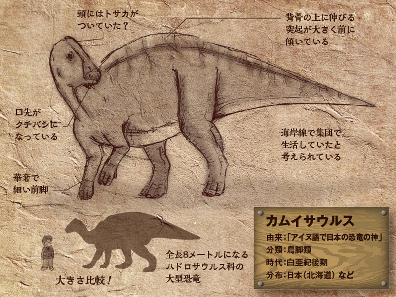 Kamuysaurus.jpg