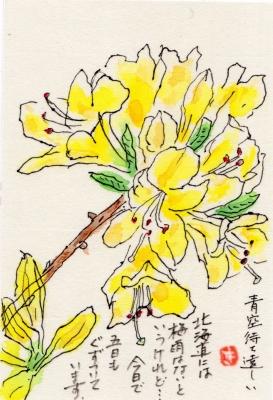 img188黄色ツツジ
