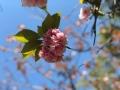 2020 4月 南部丘陵公園 桜