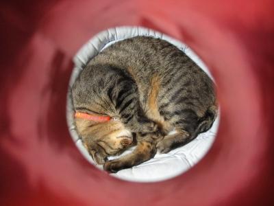 赤いホイルの筒