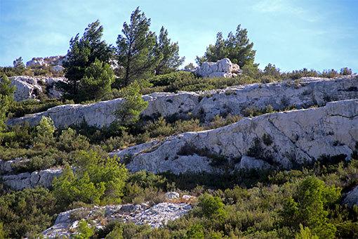 モルジウカランクへの道 斜めに走る石灰岩の白い岩肌と針葉樹の緑の縞