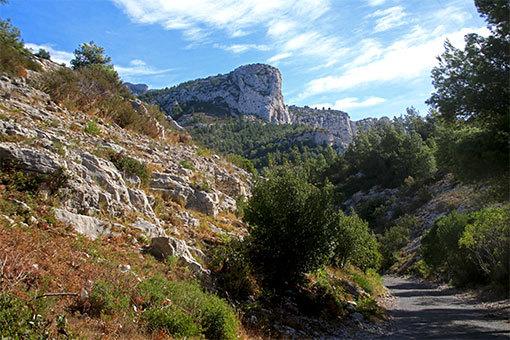 石灰岩の谷間の灌木の間の道