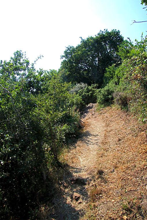 シャンポー、草藪の脇を抜ける崖脇の遊歩道