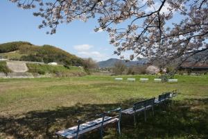 財田川の桜3