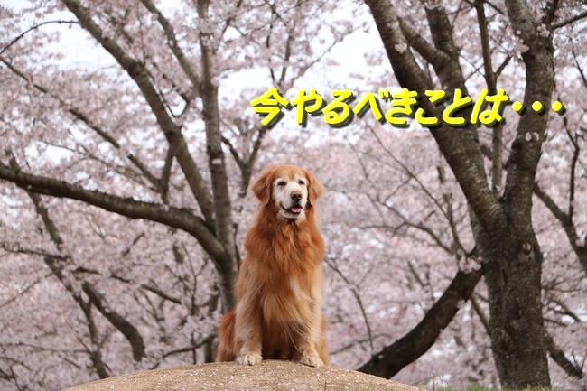 IMG_5409ケイチー