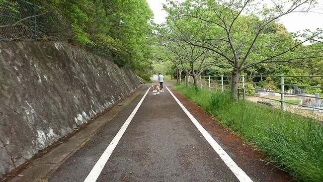 自転車道1