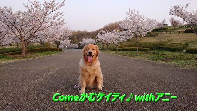 アニー防災公園桜