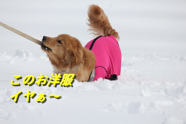 雪遊びアニー