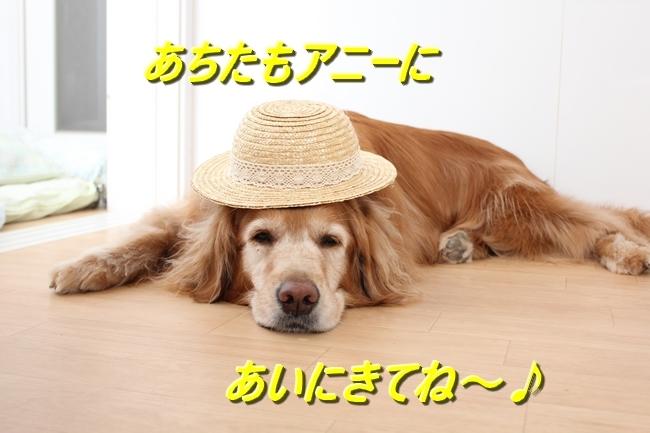 表情麦わら帽子 0413