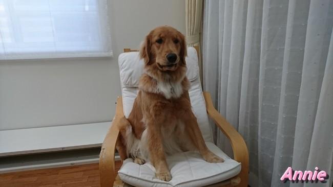 イケヤの椅子の上