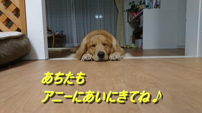 寝そべり顔