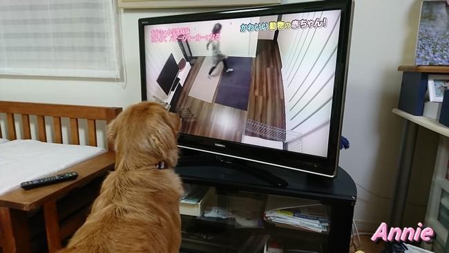 テレビにはりつき