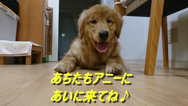 アニー2日目ブログラスト
