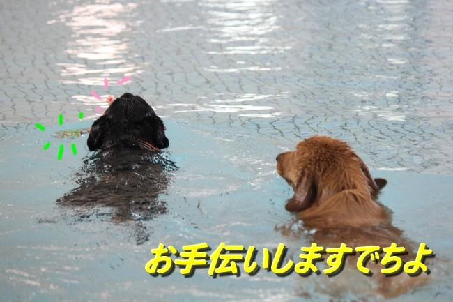 アニーとウィル君一緒に泳ぐ