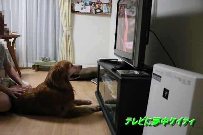 テレビケイティ
